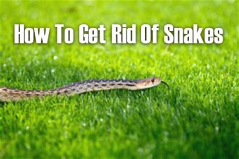 how to get rid of garden snakes how to get rid of snakes homestead survival