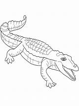 Crocodile Coloring Nile Saltwater Printable Getcolorings Library sketch template