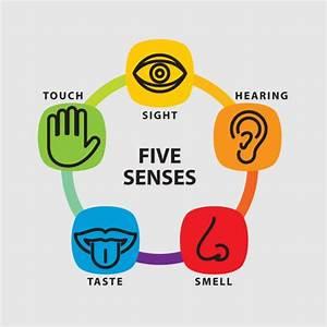 Five senses icon set Vector | Free Download