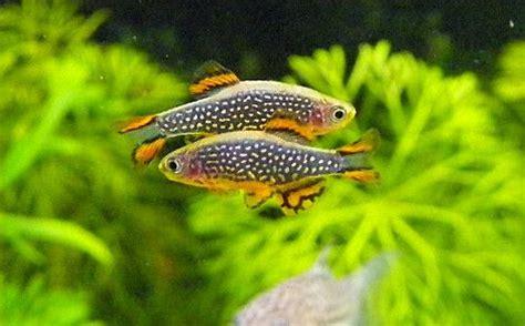 best 25 nano aquarium ideas on freshwater aquarium plants aqua aquarium and
