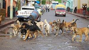 oral contraceptive for street dogs is tested
