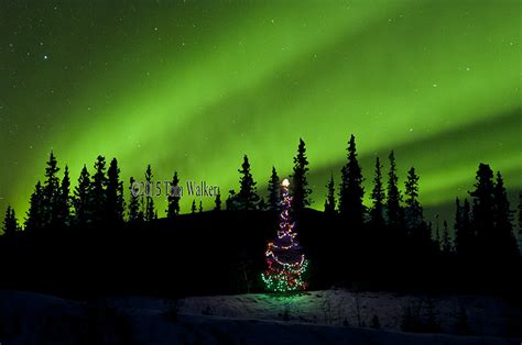 best christmas tree farms in aurora illinois photography