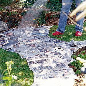 easy no dig newspaper flower bed