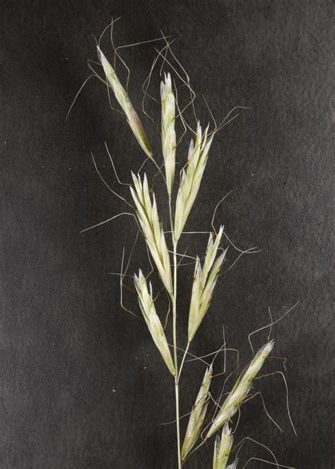 flora vascular toda la informacion detallada sobre la