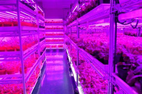 indoor farming led lights panasonic ventures into farming in singapore news eco