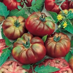 Tomate Noir De Crimée : tomate noire de crim e graines potag res meilland richardier ~ Dailycaller-alerts.com Idées de Décoration