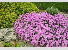 Rock Garden Plant Selection Guide Sun Plants, Zone 5