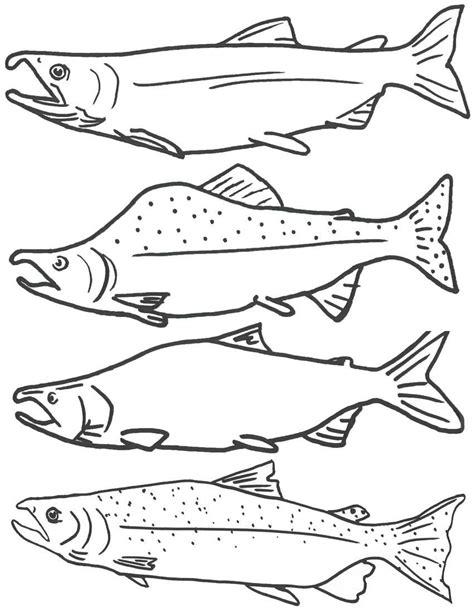 coloring page  salmon fish  printable fish