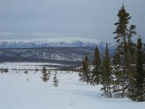 Tundra Ecosystem 7 April 2012 What Is Tundra Polartrec