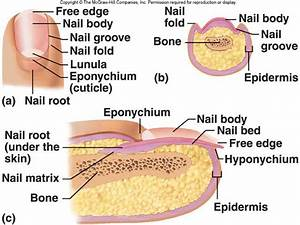 Pin On Homeschool  Integumentary Study Guides