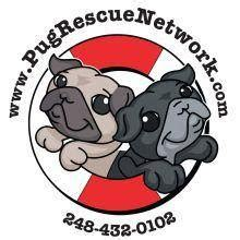pug rescue network public group facebook