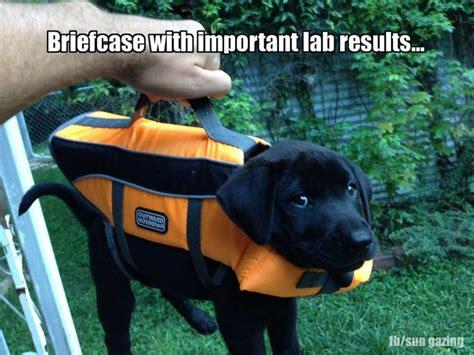 Orange Dog Meme - 23 best images about dog memes on pinterest