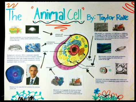 cell analogy project examples