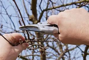 Wann Müssen Apfelbäume Geschnitten Werden : winterschnitt wann wie und wieviel schneiden ~ Lizthompson.info Haus und Dekorationen
