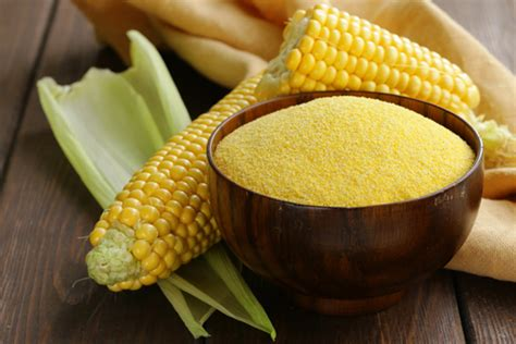 corn history corn history cultivation uses description britannica com