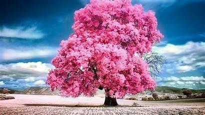 Pink Nature Landscape Tree Pc Summer Beauty