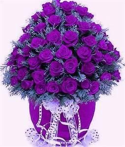 Pretty Purple Roses   Flowers   Pinterest   Beautiful ...