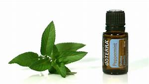 Doterra peppermint oil uses and benefits for the 21st ...