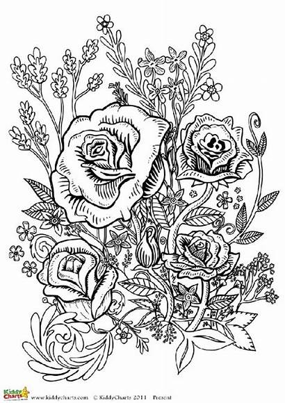 Coloring Adults Flower Adult Flowers Four Printable