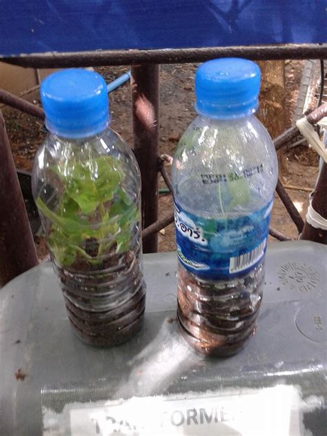 วิธีการปักชำต้นไม้ง่ายที่สุดในโลก สไตล์ ครูชาตรี - เกษตร นานา