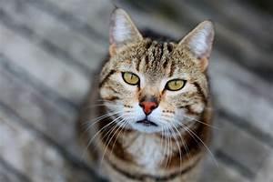 Katzen Bilder Auf Pinterest Lustige Katzenbilder Lustig