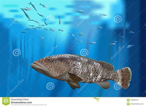 grouper bass sea fish vector barsch mero