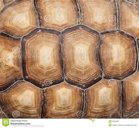 tortoise shell wallpaper wallpapersafari