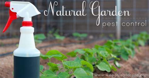 The Best Natural Garden Pest Control