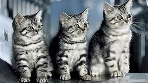 Bilder Katzen Kostenlos