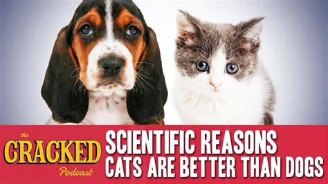 cats dogs better than scientific reasons cracked podcast