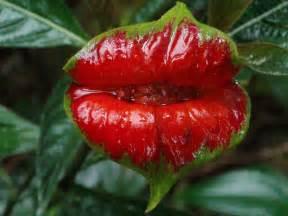 Amazon rainforest plants - buzzle, The rainforest along ...