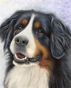Pet Portraits  U0026 Animal Art By Uk Artist Donna