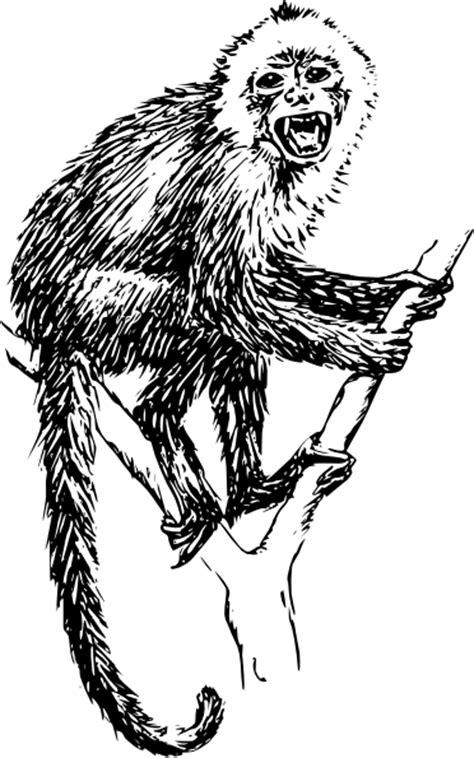 monkey clip art  clkercom vector clip art