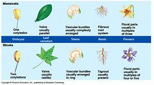 The Science Behind Holganix  Monocots Vs Dicots  What You