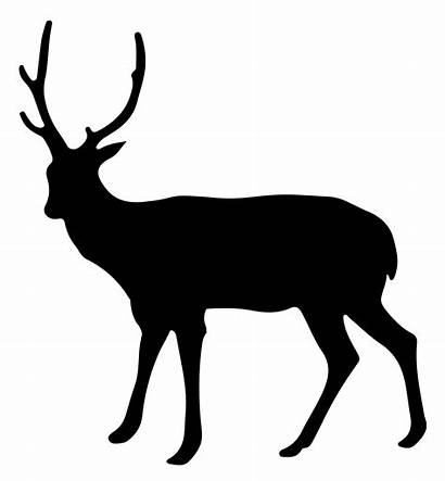 Deer Silhouette Graphic