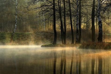 morgen im wald geben sie fotos der natuerlichen landschaft
