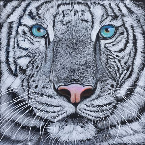 white tiger face drawing  getdrawingscom