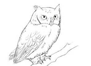 simple owl drawings easy owl drawings