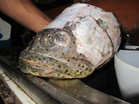 fish head grouper goliath stew cocina jew