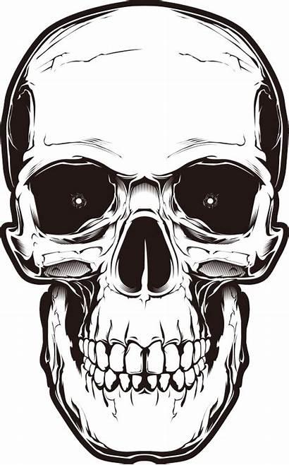 Skull Transparent Tattoo Clipart Clip Human Symbolism