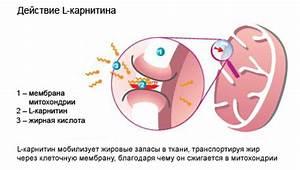 Препарат содержащие карнитин или l-карнитин для похудения