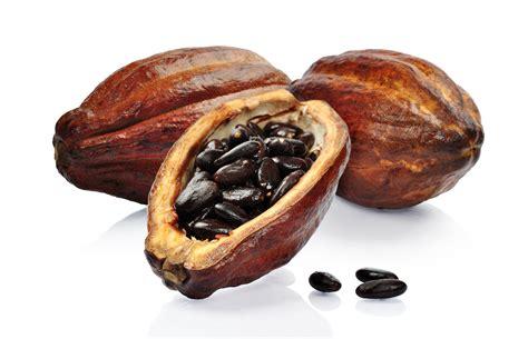 tea tree oil for hair eo34 cacao essential oil