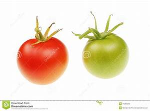Red And Green Tomatoes Stock Images - Image: 11054234