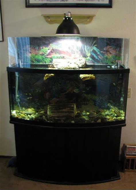 aquatic turtle basking light above tank basking area inspiration furry or not