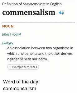 Definition of Commensalism in English Commensalism NOUN ...