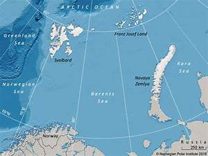 Polar bears' biggest threat is ice loss   Earth   EarthSky