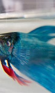 New Aquatic Wildlife Painted in Layers of Resin by Keng ...