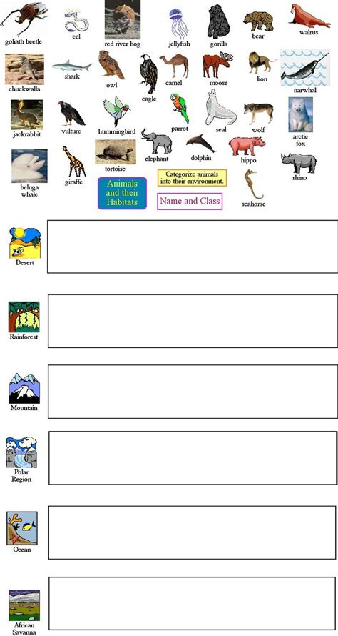 25 best ideas about animal classification worksheet on