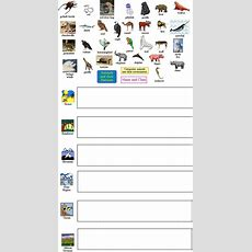 Animal Worksheet New 273 Animal Taxonomy Worksheet