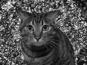 Hypno Cat GIFs - Find & Share on GIPHY